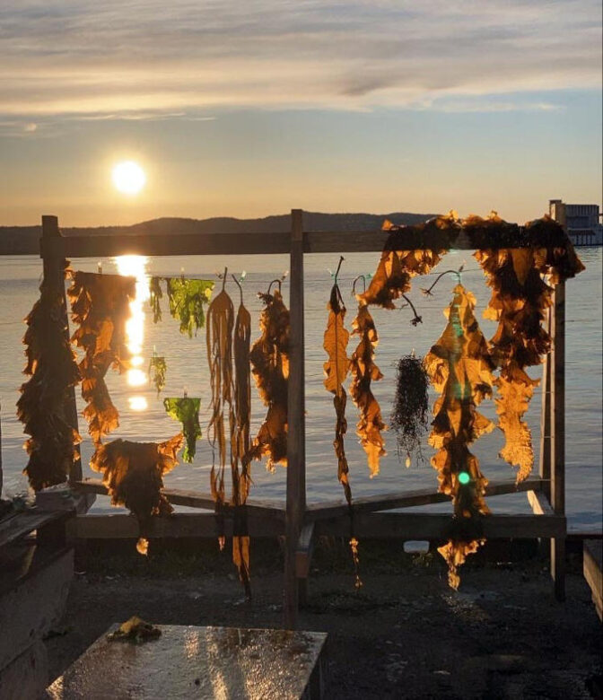 Drying different types of seaweed